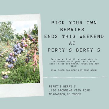 Get them while they last! This is the last weekend for pick your berries at Perry's Berry's. They will switch to fall hours starting August 10th but they will continue to have lots happening when the blueberries are all picked. Stay tubed for more updates