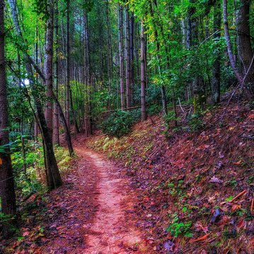 It's National Take A Hike Day! One of our favorite hikes is the Fonta Flora State Trail around Lake James. What are some of your favorite Burke County Hiking Spots? #takeahike #naturesplayground #burkeout