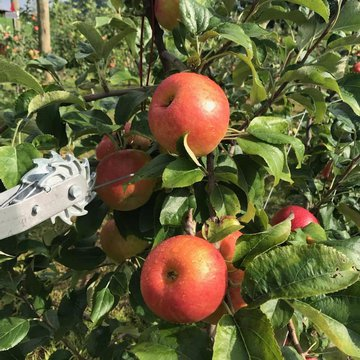 Apple season is among us! Check out our local choose and pick Apple Farm @applehillorchardnc this weekend! They have lots of varieties to choose from as well as baked goods like apple cider doughnuts and pies! Even @nctripping listed them as one of the be
