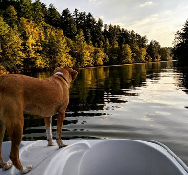 Although school has started, the summer isn't over! Come explore #naturesplayground and see what your summer has been missing!  . . . . #BurkeTreasures #lakerhodhiss #valdesenc #dogsofinstagram #fourleggedfriend #boatlife #lakelife #BurkeOut