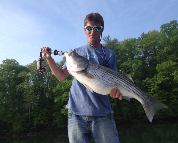 Colt Bass Fishing Featured Image