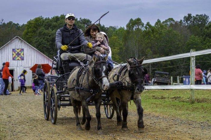 Mimosa Horse Farm.jpg